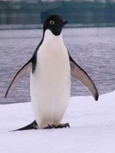SEO - Google Penguin