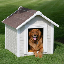 Evergreen Content - Building A Doghouse