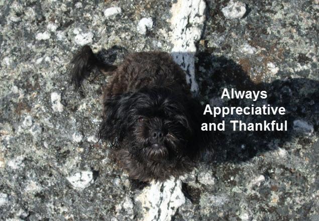 Lit'l Teen - Always Appreciative