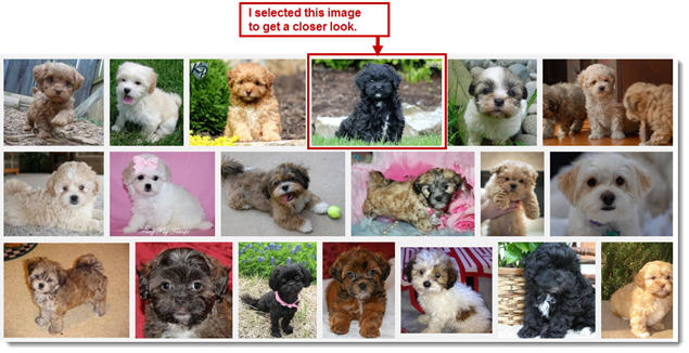 Image Search Refinement - Black Shihpoo Puppies